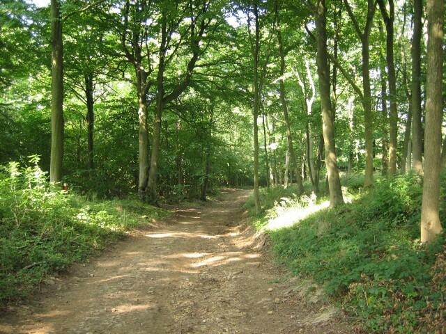 cami dins el bosc